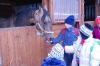 Vanoce u koni_2