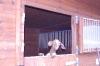 Vanoce u koni_4