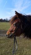 Zajíček na koni ve Waldorfské škole